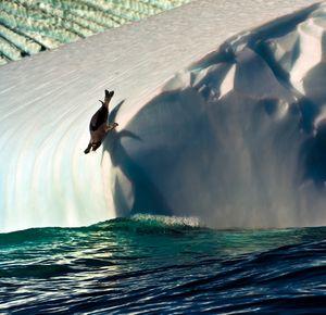 Dette er Årets nordiske naturfotografi.<br>Bildet er tatt av Audun Rikardsen