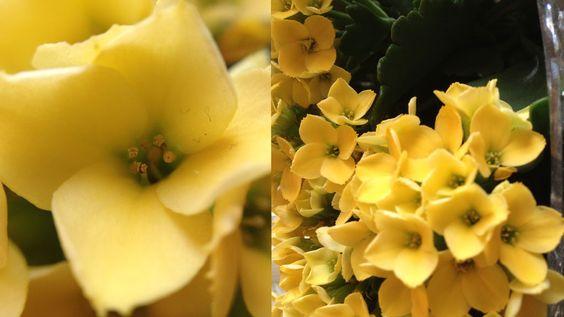 Blomsten måler ca 1x1 cm. Makrolinsen er brukt på bildet til venstre. Bildet til høyre viser hvor nær vi kom uten Olloclip.