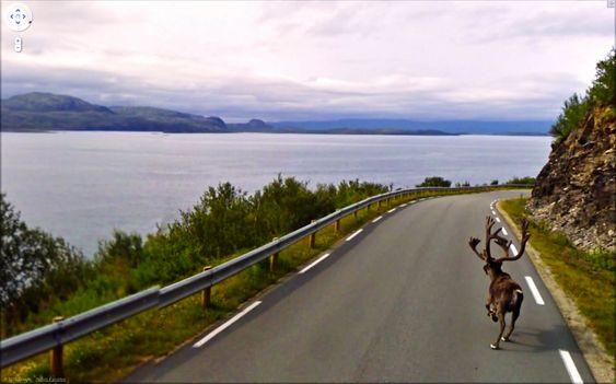 Rudolf er redd for bilen?