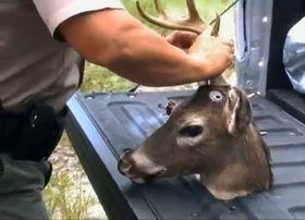 «ROBO-BAMBI»: Hjortene styres ved hjelp av en fjernkontroll som skal gi roboten mer «levende» bevegelser.