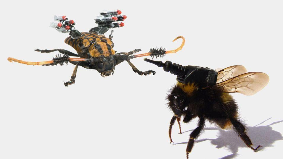 Vil framtidens krigere være insekter utstyrt med raketter og våpen?