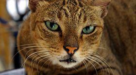 Katter har knallbra syn. Nå skal datamaskiner også få det, ved å kategorisere og tenke smart.