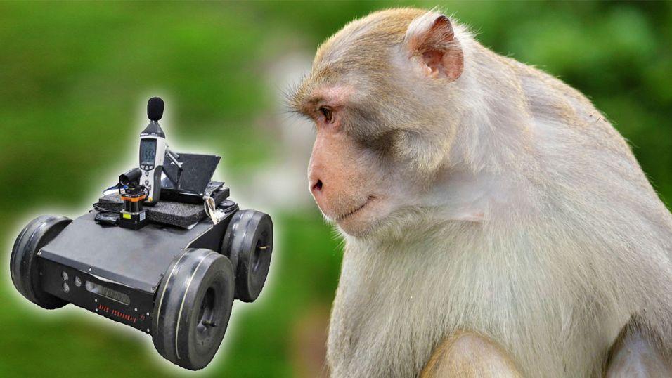 Neida, kjære ape, det er ingenting bak deg.