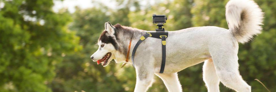 Se verden fra en hunds perspektiv