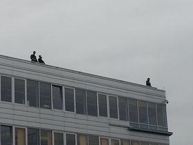 Bevæpnede soldater på taket av Telenor-bygningen på Fornebu.