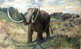 Mammut (illustrasjon: Charles R. Knight, hentet fra Wikipedia).