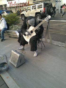 Gitar + sjimpanse.
