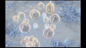 Isstormer er en av mange taktiske nyanser i dette spillet.