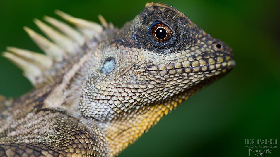 Kom tett på reptiler