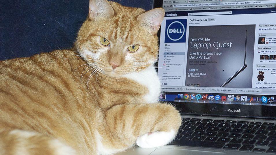 Illustrasjonsbilde med en katt og MacBook.