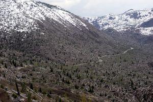 Store skogsområdet ble jevnet med jorden under utbruddet.