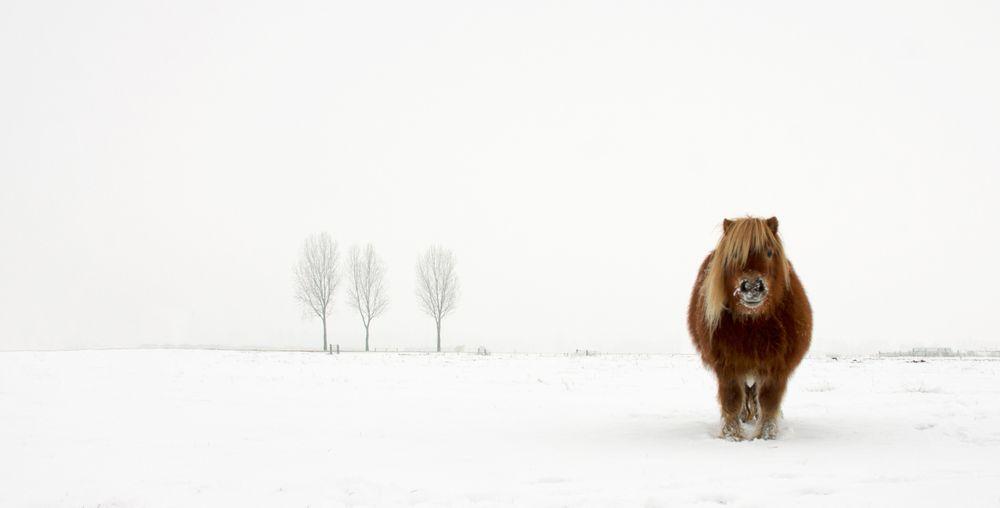 Kategori: Natur og dyreliv. 2014 Sony World Photography Awards.