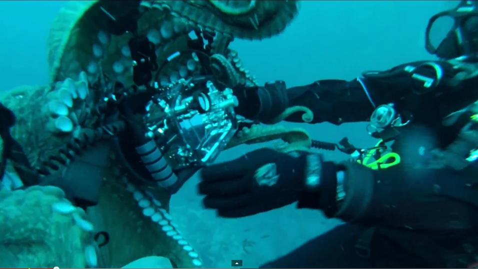 Her blir fotografen angrepet av en enorm blekksprut
