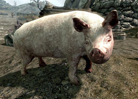 Strengt tatt er det ingen griser i Skyrim. Med mindre du installerer noen, da.