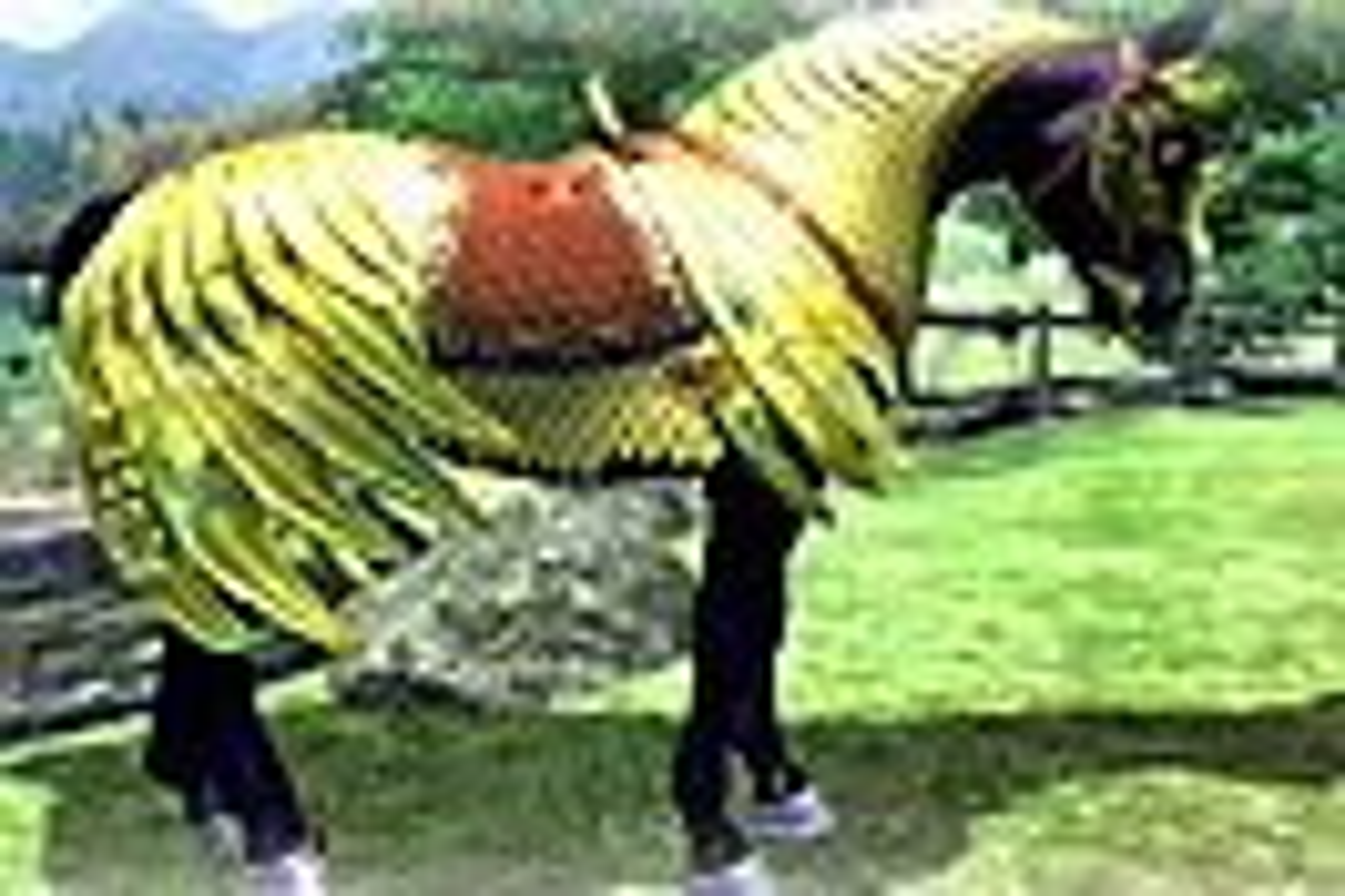 Nedlastbar hesterustning for Oblivion