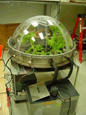 Slik ser forskerne for seg at salat kan dyrkes i rommet.