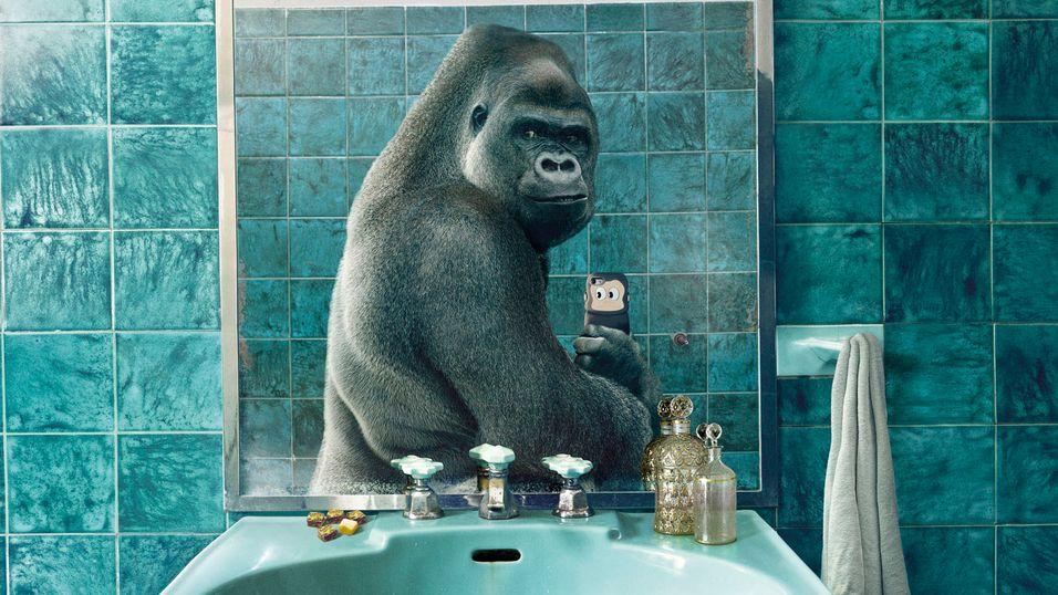 Hva om dyr hadde mobiltelefoner?