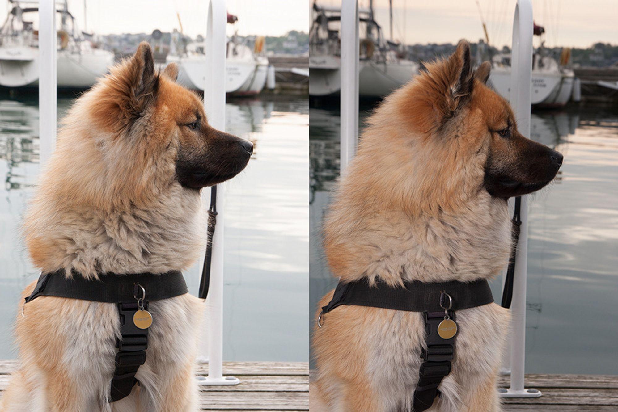 Bildet til høyre er tatt med blits, slik at bakgrunnen tones ned.