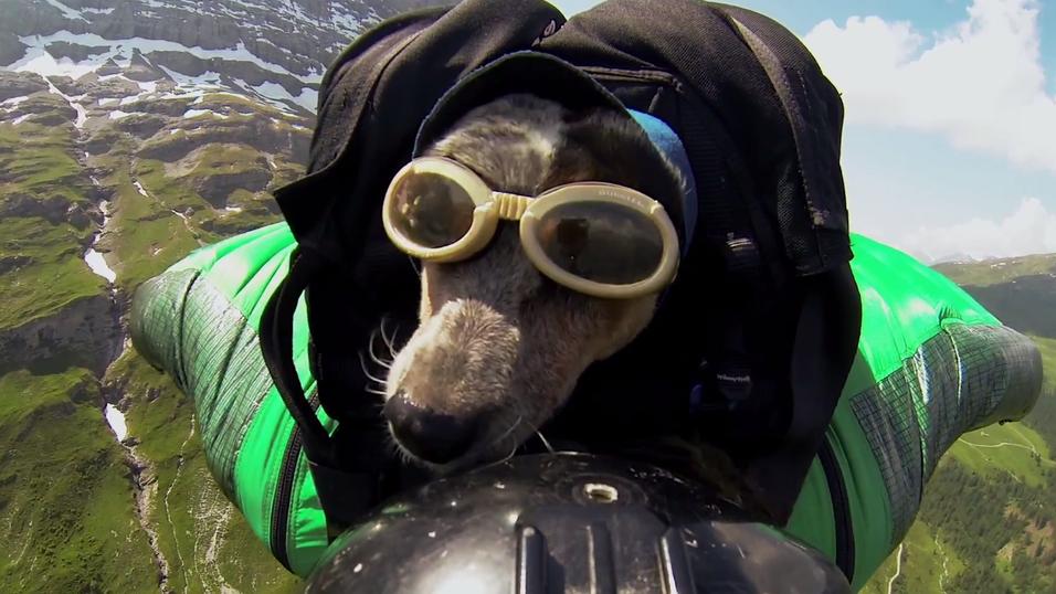 Sjekk GoPro-videoen av den flyvende hunden