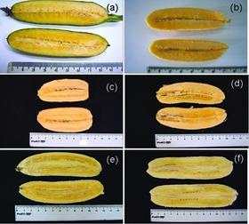 Her ser du bilder fra et annet forsøk med karotenrike bananer.