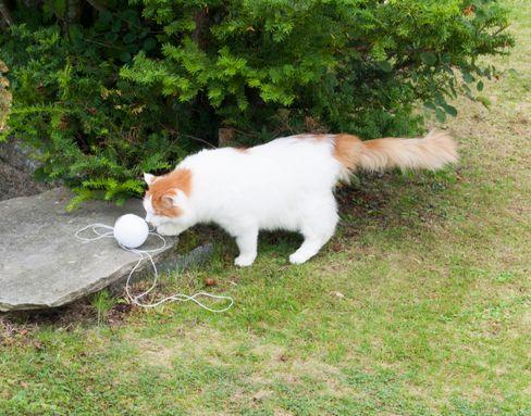 Katten skjønner ikke så mye av hva som foregår, men den skjønner hyssing, og har ikke blitt overkjørt av Robomow en eneste gang.