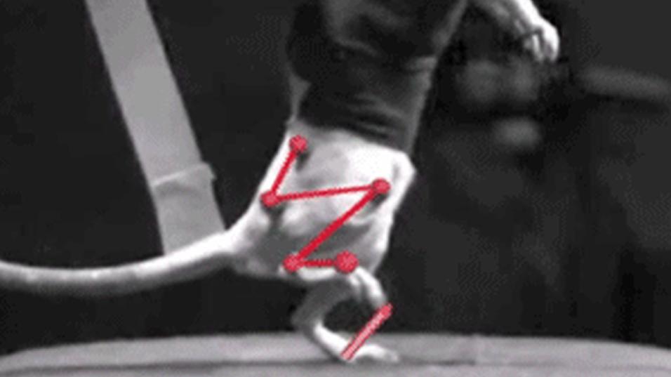 Dette bildet er hentet fra forskernes første eksperiment, som endte med skader på rottenes nerver.