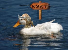 Her ser vi altså Slütsof på vei til det magiske landet Stagram.
