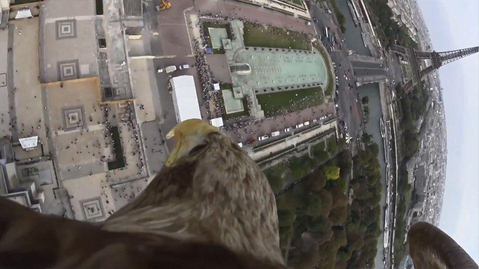 En ørn testet Sonys nye actionkamera