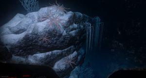 Kalde grøss på havets bunn