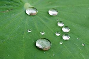 Løsningen hermer etter de ørsmå hørene på blader, som gjør at overflatespenningen i vanndråper ikke brytes.