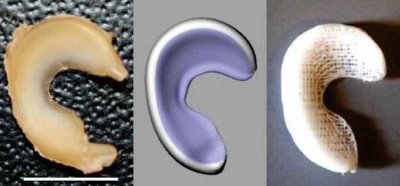 Fra venstre: Saue-menisk, 3D-modellen og den ferdige 3D-printede kopien.