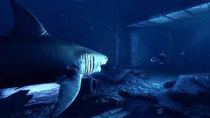 Jakt på forhistorisk monsterhai