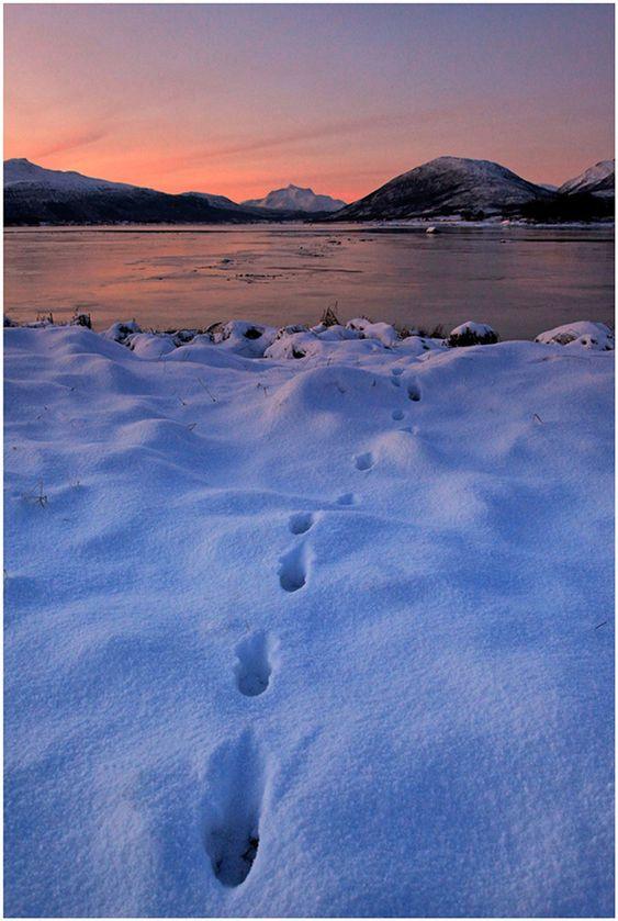 «Spor i blå snø».