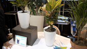 Snart kommer Parrot Pot for salg. Bildet er av fjorårets prototyper.