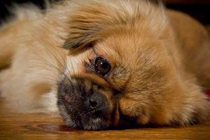 At hunder selv kan kommunisere med ansiktsuttrykk er godt kjent.