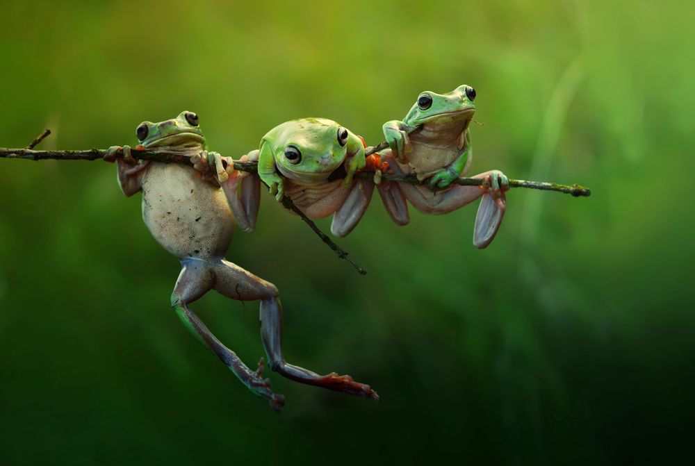 Three cute frog at the morning lights.