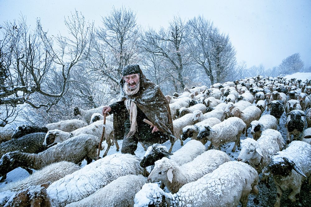 An old shepherd that had been surprised by snow storm in Gilan's countrysides in the north of Iran.