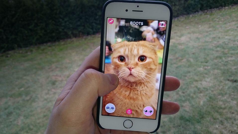 BuzzFeeds nye app vil gjøre katten din til en kjendis