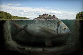 «Fishy island».