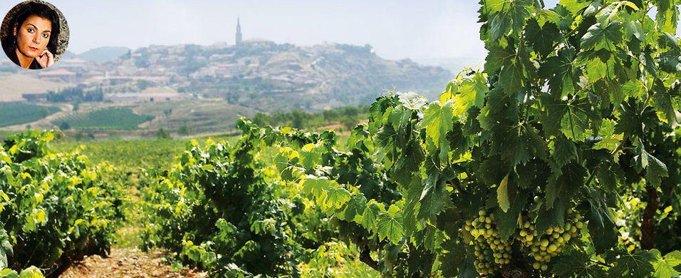 Etter denne kvelden vet du mye mer om Spanias viner – Vinkurs 19. januar i Oslo
