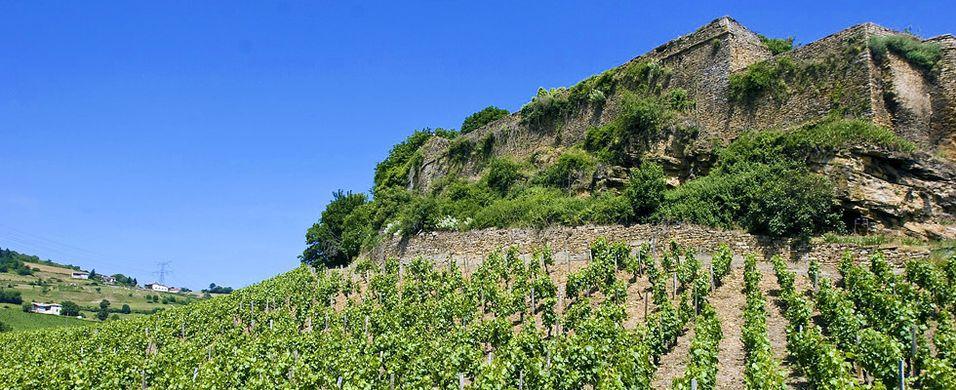 Underjordisk dryppvanning brer om seg i vinmarkene
