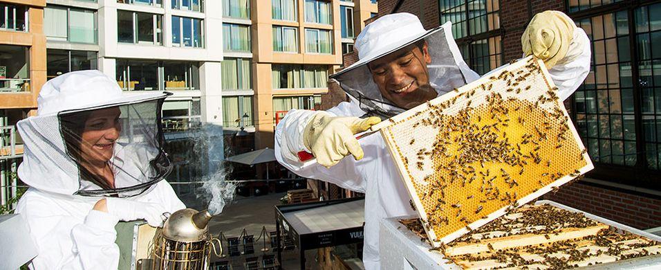Hvilke bier tror du gir best honning?