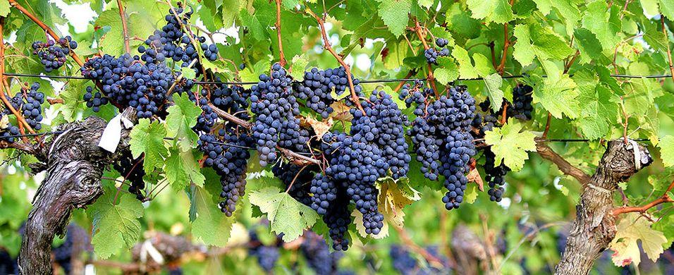 Nyhetene på spesialpolet september 2013 - rødviner fra Rhône