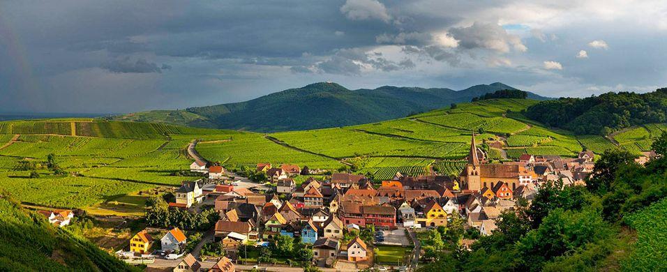 Test av riesling fra Alsace - 2010