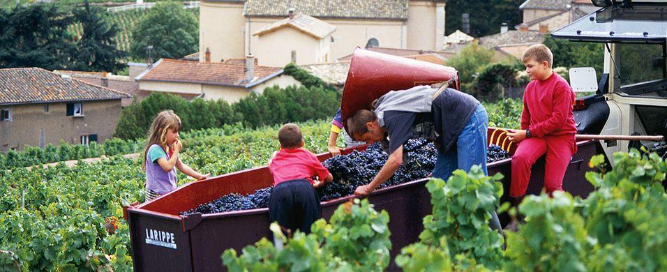 Beaujolais i krise