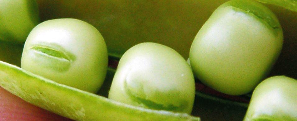 Ringerikserten - en beskyttet matskatt
