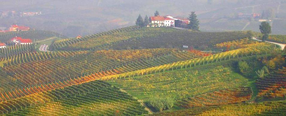 Frykter italiensk vinhøst