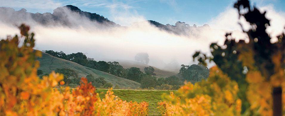 TEST: California puster Burgund i nakken