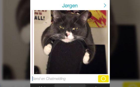 Endelig kan vi sende alle kattebildene vi har lagret på mobilen!