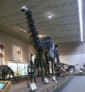 Nå kan denne hete brontosaurus igjen.
